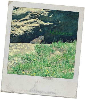 Ms. Marmot